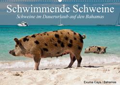 Schwimmende Schweine (Wandkalender 2021 DIN A2 quer) von Stanzer,  Elisabeth