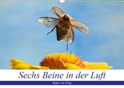 Sechs Beine in der Luft – Käfer im Flug (Wandkalender 2020 DIN A3 quer) von Skonieczny,  André
