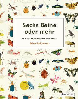 Sechs Beine oder mehr – Die Wunderwelt der Insekten und Spinnen von Löwenberg,  Ute, Teckentrup,  Britta