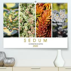 Sedum Schönheiten im Garten (Premium, hochwertiger DIN A2 Wandkalender 2020, Kunstdruck in Hochglanz) von Cross,  Martina