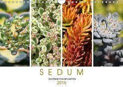 Sedum Schönheiten im Garten (Wandkalender 2019 DIN A4 quer) von Cross,  Martina