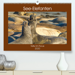 See-Elefanten (Premium, hochwertiger DIN A2 Wandkalender 2020, Kunstdruck in Hochglanz) von Smith,  Sidney