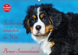 Seebärchen entdecken die Welt – Berner Sennenhunde (Wandkalender 2019 DIN A2 quer) von Starick,  Sigrid