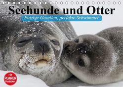 Seehunde und Otter. Putzige Gesellen, perfekte Schwimmer (Tischkalender 2019 DIN A5 quer) von Stanzer,  Elisabeth