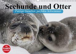 Seehunde und Otter. Putzige Gesellen, perfekte Schwimmer (Wandkalender 2019 DIN A3 quer) von Stanzer,  Elisabeth