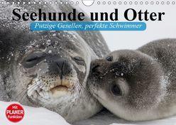 Seehunde und Otter. Putzige Gesellen, perfekte Schwimmer (Wandkalender 2019 DIN A4 quer) von Stanzer,  Elisabeth