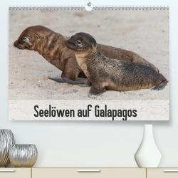 Seelöwen auf Galapagos (Premium, hochwertiger DIN A2 Wandkalender 2021, Kunstdruck in Hochglanz) von Reuke,  Sabine