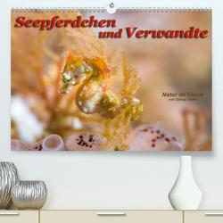 Seepferdchen und Verwandte (Premium, hochwertiger DIN A2 Wandkalender 2020, Kunstdruck in Hochglanz) von Smith,  Sidney