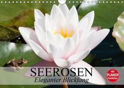 Seerosen. Eleganter Blickfang (Wandkalender 2019 DIN A4 quer) von Stanzer,  Elisabeth