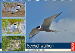 Seeschwalben – Extremsportler der Lüfte (Premium, hochwertiger DIN A2 Wandkalender 2020, Kunstdruck in Hochglanz) von Schaack,  René