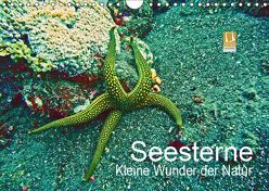 Seesterne – Kleine Wunder der Natur (Wandkalender 2019 DIN A4 quer) von Hess,  Andrea