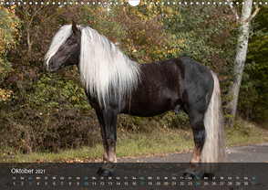 Seltene Kaltblüter – Rare Heavy Horses (Wandkalender 2021 DIN A3 quer) von Pixel Nomad,  The, Zahorka,  Cécile
