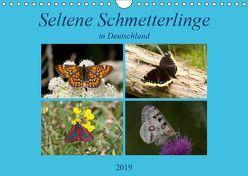 Seltene Schmetterlinge in Deutschland (Wandkalender 2019 DIN A4 quer) von Erlwein,  Winfried