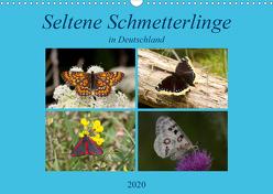 Seltene Schmetterlinge in Deutschland (Wandkalender 2020 DIN A3 quer) von Erlwein,  Winfried