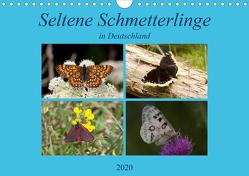 Seltene Schmetterlinge in Deutschland (Wandkalender 2020 DIN A4 quer) von Erlwein,  Winfried