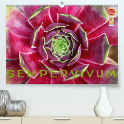 Sempervivum – Hauswurz (Premium, hochwertiger DIN A2 Wandkalender 2020, Kunstdruck in Hochglanz) von Cross,  Martina