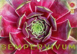 Sempervivum – Hauswurz (Wandkalender 2019 DIN A3 quer) von Cross,  Martina