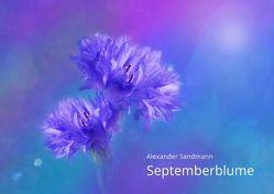Septemberblume von Kalder,  Tobias