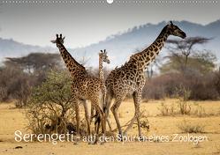 Serengeti – auf den Spuren eines Zoologen (Wandkalender 2020 DIN A2 quer) von Maaß,  Jürgen