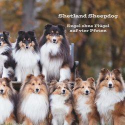 Shetland Sheepdog von Steuerwald,  Sissi