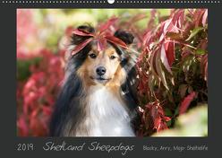 Shetland Sheepdogs Blacky, Anry, Mojo Sheltielife 2019 (Wandkalender 2019 DIN A2 quer) von Kudla,  Madlen