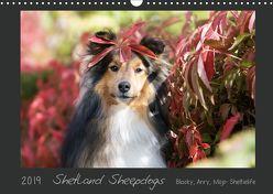 Shetland Sheepdogs Blacky, Anry, Mojo Sheltielife 2019 (Wandkalender 2019 DIN A3 quer) von Kudla,  Madlen