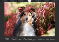 Shetland Sheepdogs Blacky, Anry, Mojo Sheltielife 2019 (Wandkalender 2019 DIN A4 quer) von Kudla,  Madlen