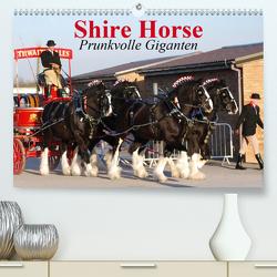 Shire Horse • Prunkvolle Giganten (Premium, hochwertiger DIN A2 Wandkalender 2020, Kunstdruck in Hochglanz) von Stanzer,  Elisabeth