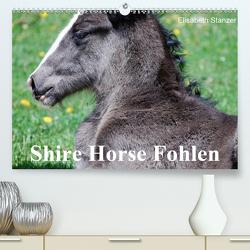 Shire Horse Fohlen (Premium, hochwertiger DIN A2 Wandkalender 2020, Kunstdruck in Hochglanz) von Stanzer,  Elisabeth