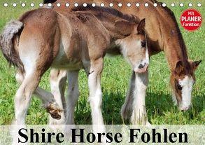 Shire Horse Fohlen (Tischkalender 2018 DIN A5 quer) von Stanzer,  Elisabeth
