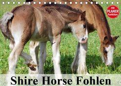 Shire Horse Fohlen (Tischkalender 2019 DIN A5 quer) von Stanzer,  Elisabeth