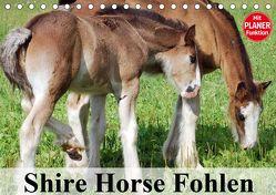 Shire Horse Fohlen (Tischkalender 2020 DIN A5 quer) von Stanzer,  Elisabeth