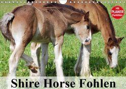 Shire Horse Fohlen (Wandkalender 2019 DIN A4 quer) von Stanzer,  Elisabeth