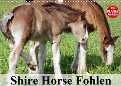 Shire Horse Fohlen (Wandkalender 2020 DIN A3 quer) von Stanzer,  Elisabeth