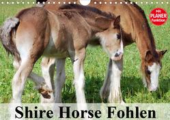 Shire Horse Fohlen (Wandkalender 2020 DIN A4 quer) von Stanzer,  Elisabeth