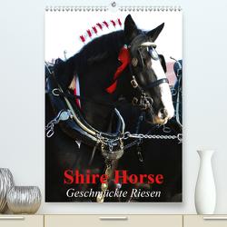 Shire Horse – Geschmückte Riesen (Premium, hochwertiger DIN A2 Wandkalender 2020, Kunstdruck in Hochglanz) von Stanzer,  Elisabeth