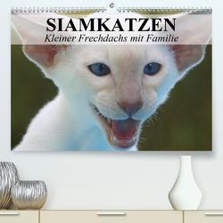 Siamkatzen – Kleiner Frechdachs mit Familie (Premium, hochwertiger DIN A2 Wandkalender 2020, Kunstdruck in Hochglanz) von Stanzer,  Elisabeth