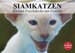 Siamkatzen – Kleiner Frechdachs mit Familie (Wandkalender 2019 DIN A3 quer) von Stanzer,  Elisabeth