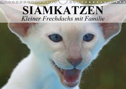 Siamkatzen – Kleiner Frechdachs mit Familie (Wandkalender 2019 DIN A4 quer) von Stanzer,  Elisabeth