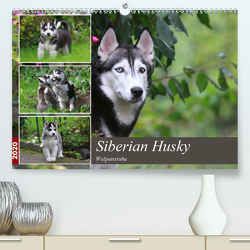 Siberian Husky – Welpenstube (Premium, hochwertiger DIN A2 Wandkalender 2020, Kunstdruck in Hochglanz) von Mielewczyk,  Barbara