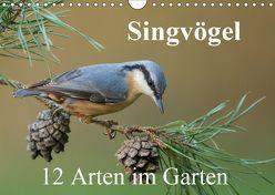 Singvögel – 12 Arten im Garten (Wandkalender 2019 DIN A4 quer) von birdimagency,  BIA