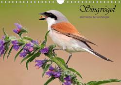 Singvögel, Heimische und Durchzügler (Wandkalender 2021 DIN A4 quer) von Brandmeier,  Wolfgang