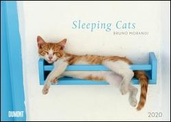 Sleeping Cats – Wandkalender – Format 42 x 29,7 cm von DUMONT Kalenderverlag, Morandi,  Tuul & Bruno