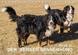 So ist er. Der Berner Sennenhund (Tischkalender 2019 DIN A5 quer) von Hunscheidt,  Hubert
