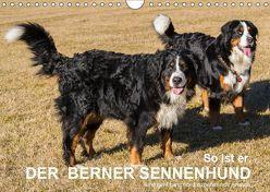 So ist er. Der Berner Sennenhund (Wandkalender 2019 DIN A4 quer) von Hunscheidt,  Hubert