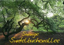 Sonnige Süntelbuchenallee (Wandkalender 2019 DIN A3 quer) von Loewa,  Bernhard