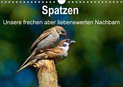 Spatzen, unsere frechen aber liebenswerte Nachbarn (Wandkalender 2018 DIN A4 quer) von Klapp,  Lutz