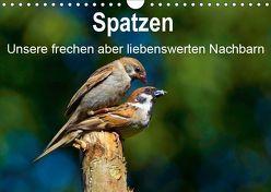 Spatzen, unsere frechen aber liebenswerte Nachbarn (Wandkalender 2019 DIN A4 quer) von Klapp,  Lutz