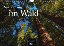 Spaziergang im Wald (Wandkalender 2019 DIN A4 quer) von Hoffmann,  Nils