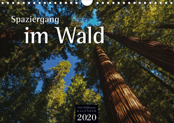 Spaziergang im Wald (Wandkalender 2020 DIN A4 quer) von Hoffmann,  Nils